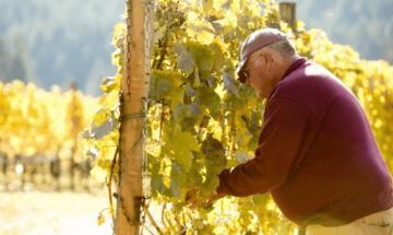 Kramer Vineyards Hero Image 1